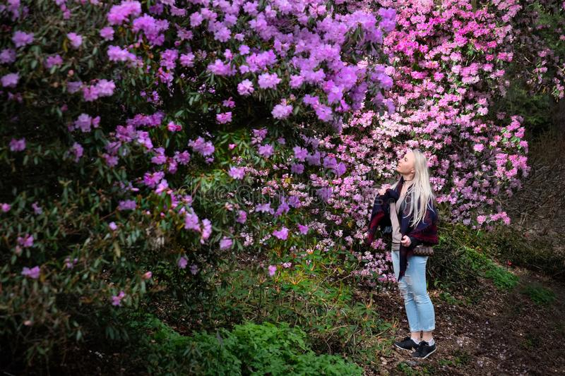 Young pretty woman in rhododendron garden enjoying purple flowers stock photo