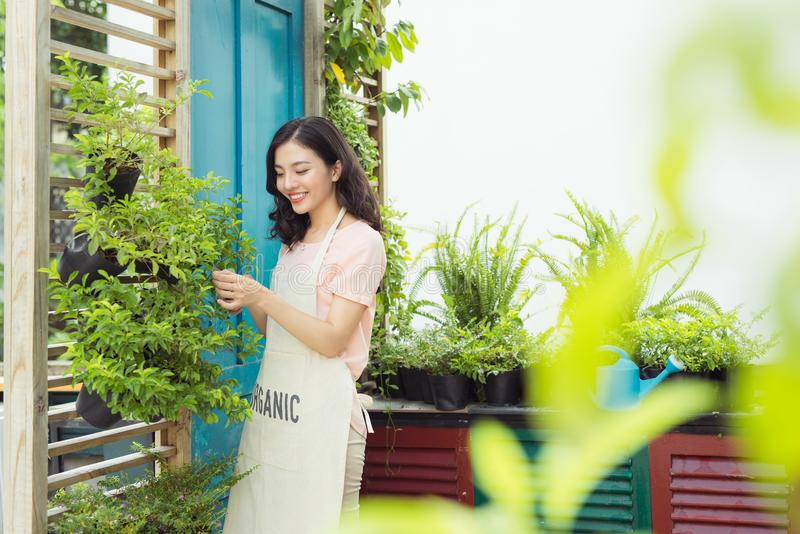 Young professional woman in apron cut green bush clippers in the. Garden royalty free stock photo