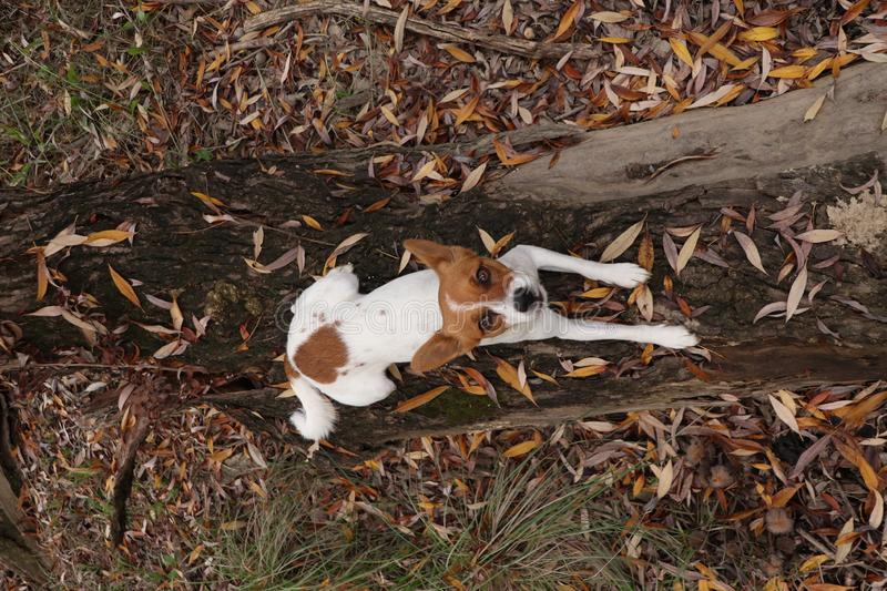 Young puppy lying on tree trunk looking upwards stock photos