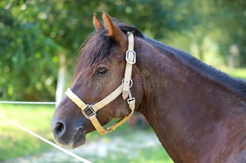 Young purebred horse relaxing in the shadow royalty free stock photo