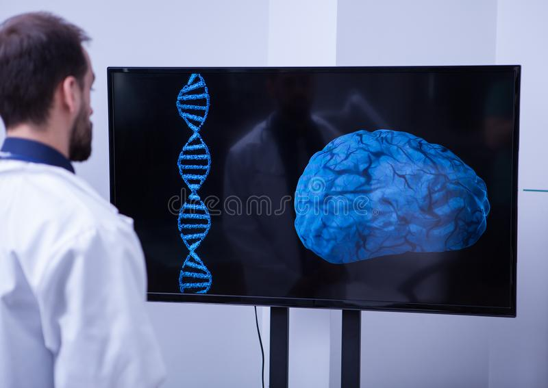 Young radiologist analysing a healthy brain in the hospital laboratory. Doctor specialized in brain health surgery royalty free stock images