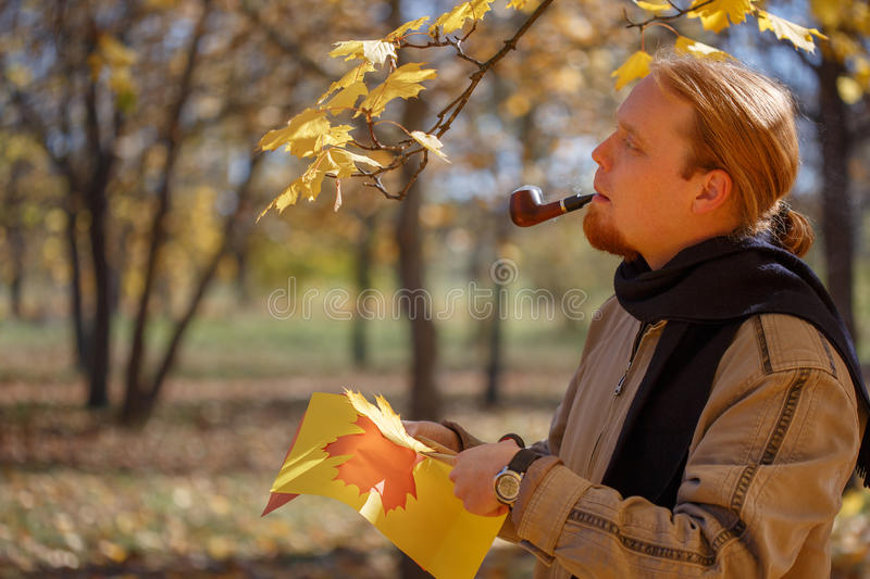 Young red-haired bearded man smokes pipe and cuts maple leaves o stock images