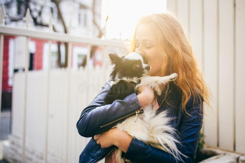 A young red-haired Caucasian woman holds a small funny dog in the arms of two colors of black and white chihuahua. Hugs and kisses stock photos