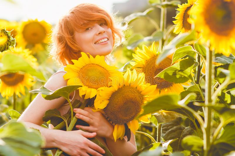 Young redheaded woman in the field of sunflowers holding a huge bunch of flowers in a sunny summer evening royalty free stock images