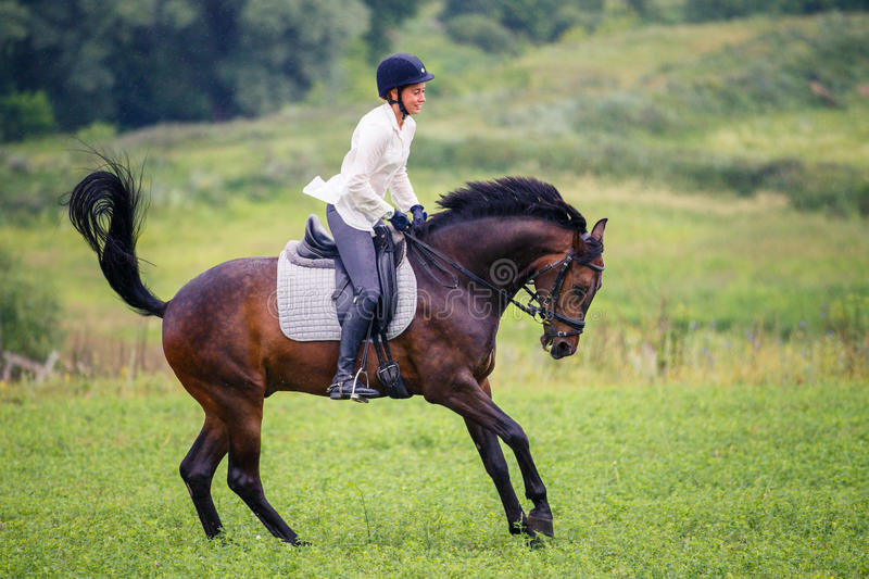 Young rider woman galloping on bay horse on meadow royalty free stock image