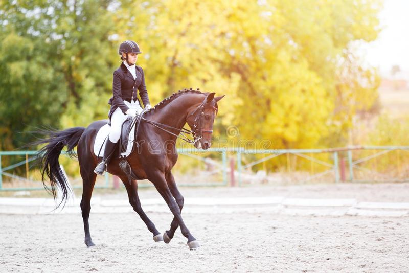 Young rider woman on horse on dressage competition. Young rider woman on bay horse performing advanced test on dressage competition. Equestrian event background stock photo