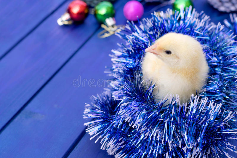 Young rooster, little chick. Animal, bird, poultry. Celebration background with young rooster, chick - a symbol of new year 2017. Animal, bird, poultry. Free stock photography