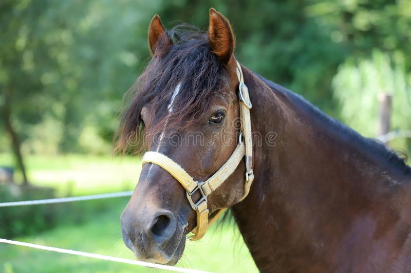 Young purebred horse relaxing in the shadow royalty free stock images