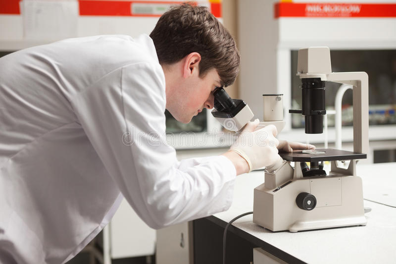 Download Young Science Student Looking In A Microscope Stock Image - Image of knowledge, laboratory: 21147429