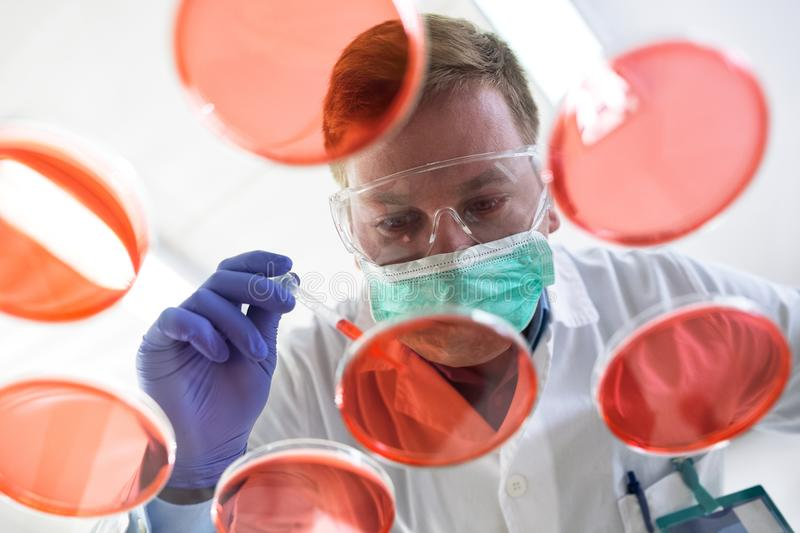 Young scientist puts sample with pipette stock photo