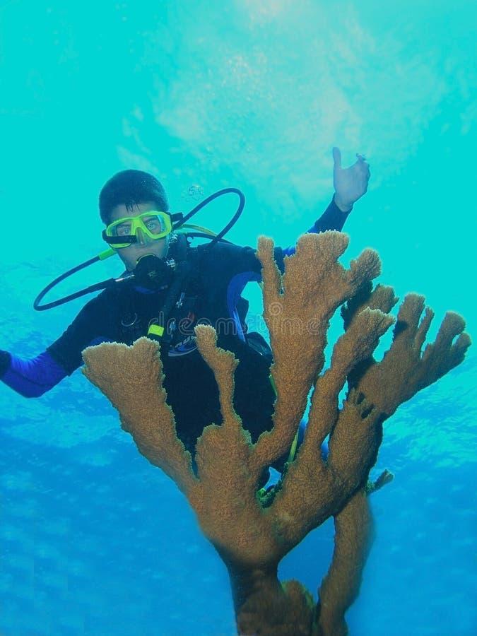 Young scuba diver and fire coral stock photos