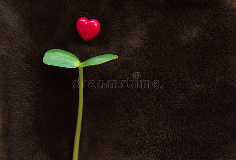 Young seed plant with red heart on brown background royalty free stock photography