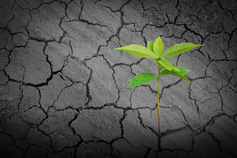 Young seedling growing on clay dry soil stock photography