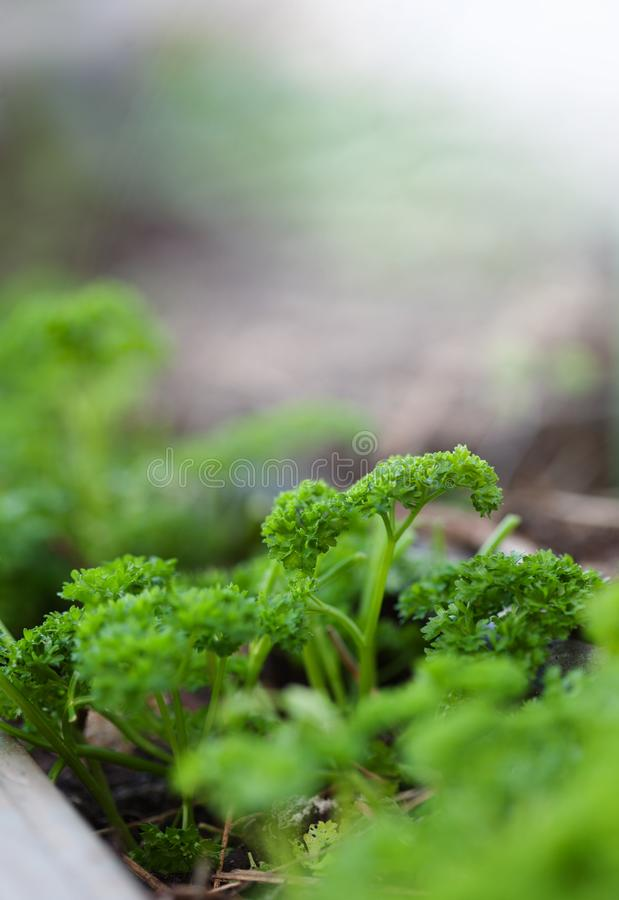 Young seedlings close-up. stock images