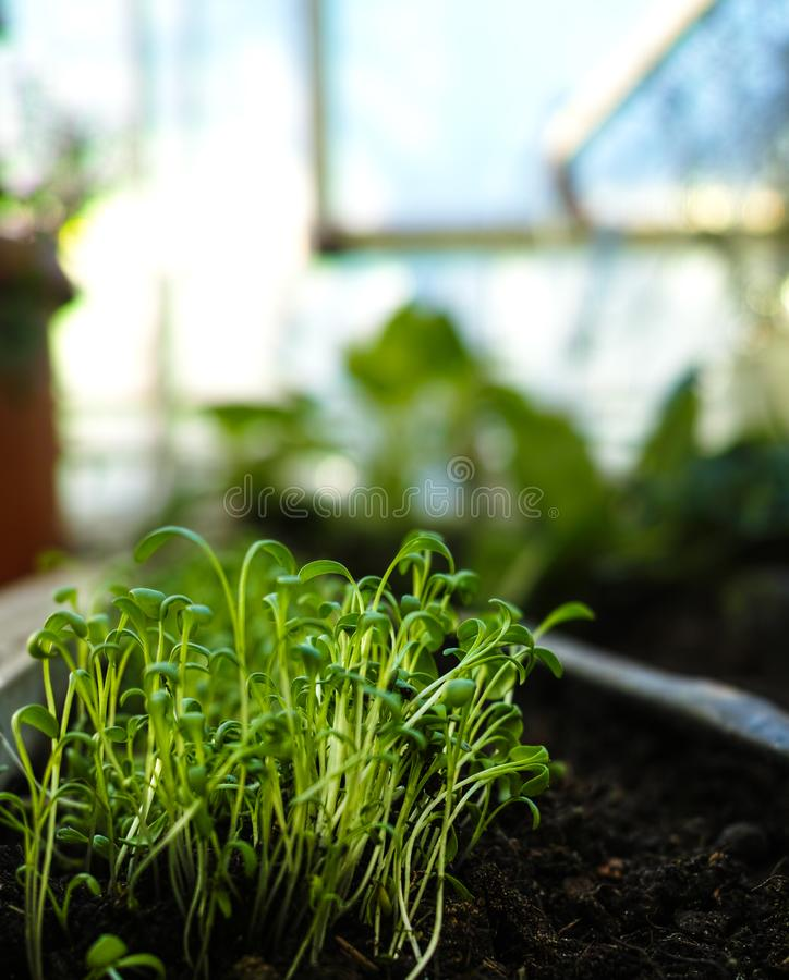 Young seedlings close-up. stock photos