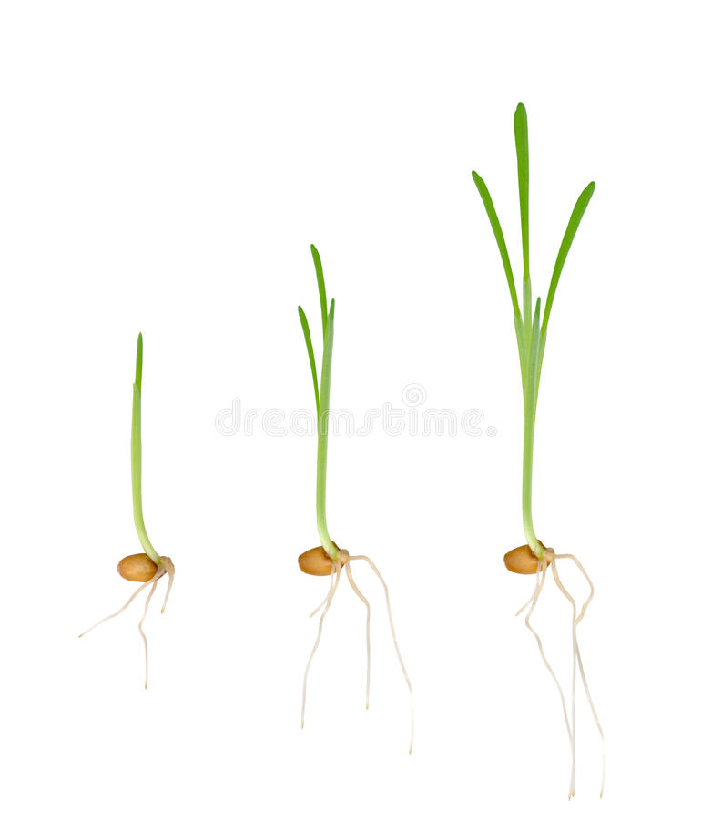Young seedlings of plants royalty free stock photos
