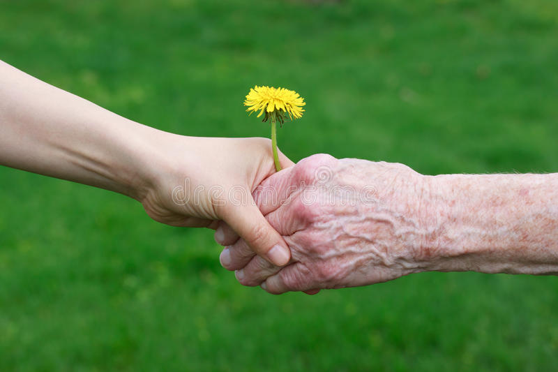 Young and Senior with Dandelion stock photos