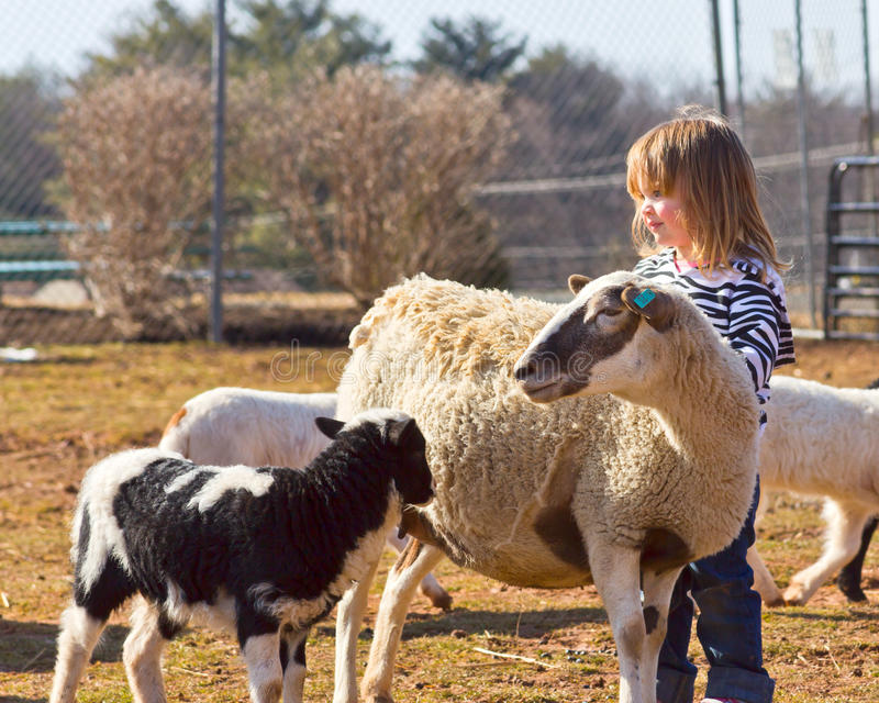 Young sheep lover royalty free stock photo