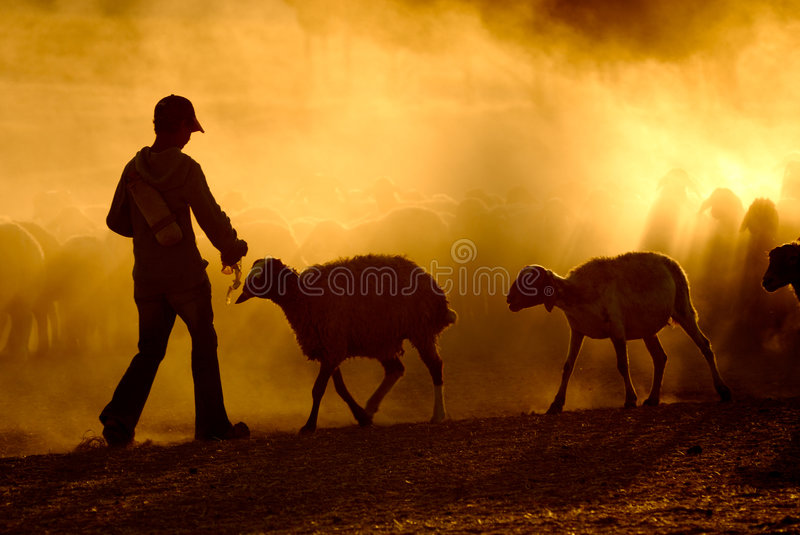 Download Young shepherd stock image. Image of summer, outdoors - 4479721