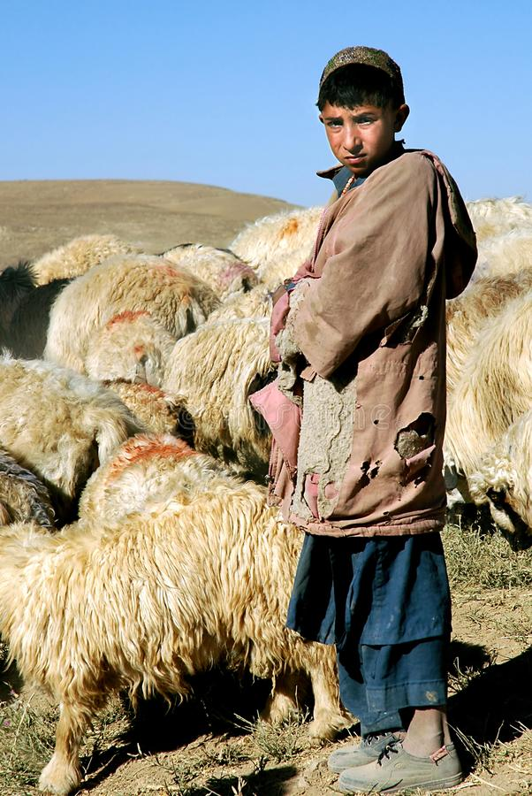 A young shepherd boy with his flock near Chaghcharan, Ghor Province, Central Afghanistan stock images
