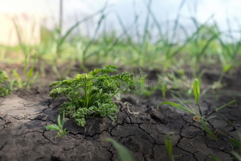 Young shoots of greenery under the sun stock photo