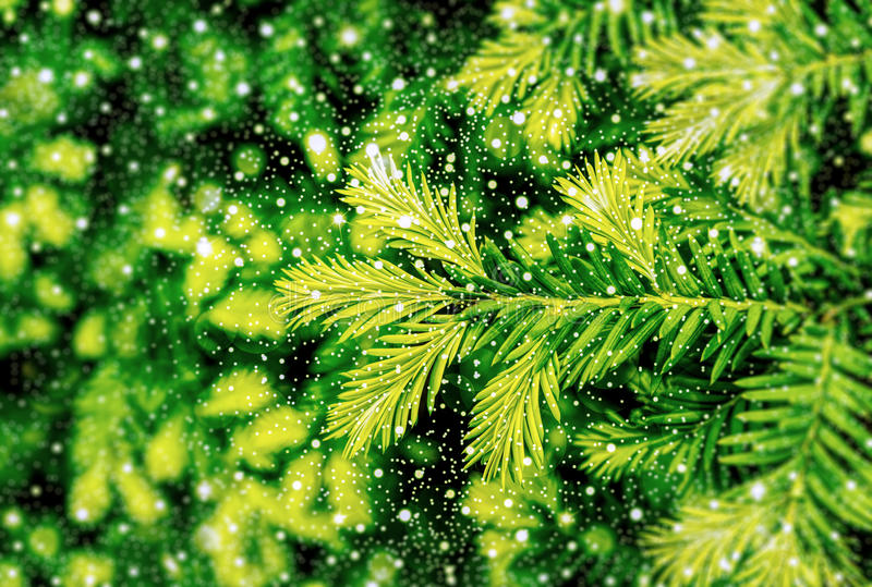 Young shoots of pine tree macro with shiny snowfall HDR. Effect royalty free stock image