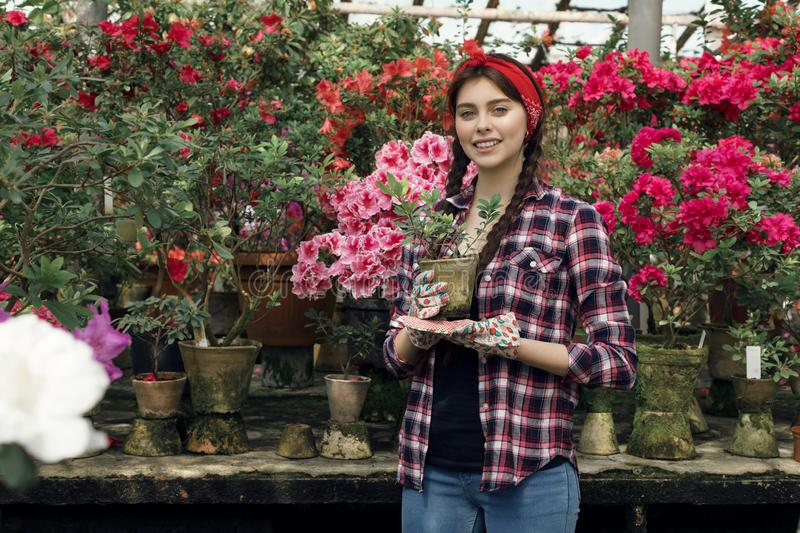 Young sporty beautiful gardener with read headband holding plants in hand. Preparing to transfer them to new bowls for upcoming sale. Greenhouse flowers royalty free stock photos
