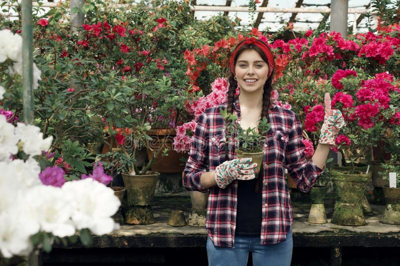 Young sporty beautiful gardener with read headband holding plants in hand. Preparing to transfer them to new bowls for upcoming sale. Greenhouse flowers stock images