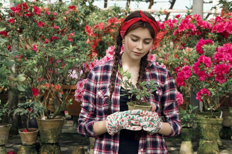 Young sporty beautiful gardener with read headband holding plants in hand. Preparing to transfer them to new bowls for upcoming sale. Greenhouse flowers royalty free stock photography