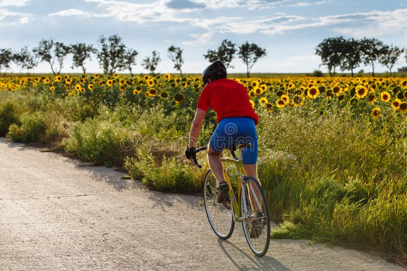 Young sporty cyclist riding on road bicycle along the field of sunflowers. Back view. stock photo