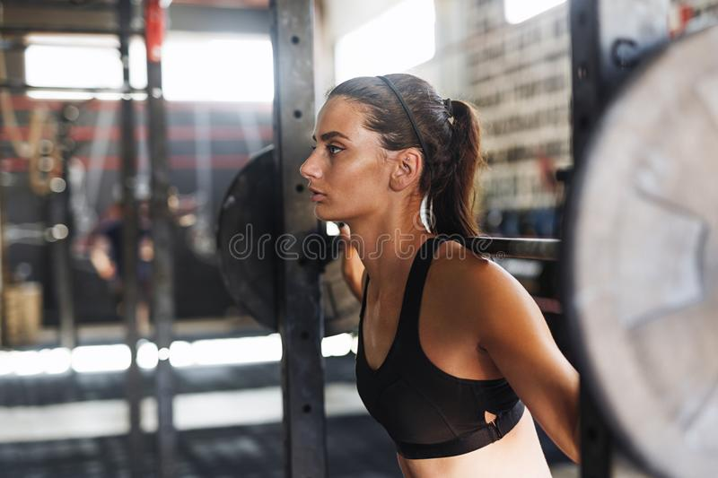 Young sporty female working out at gym royalty free stock images