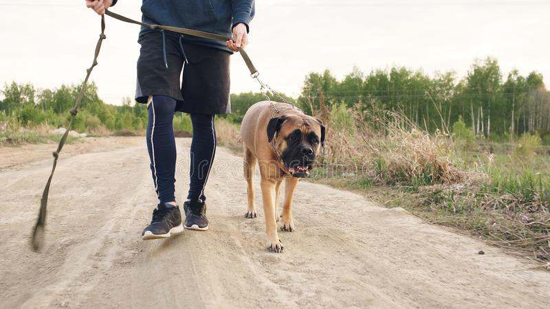 Closeup of young sporty man walking with his bullmastiff dog outdoor at nature after workout training stock photography