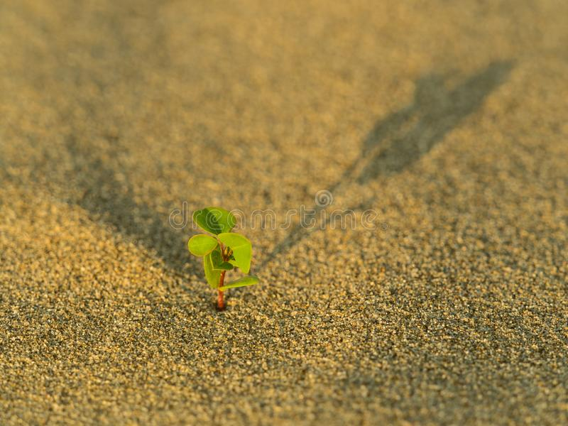 Young sprout born in the sands. Concept strength of life royalty free stock images