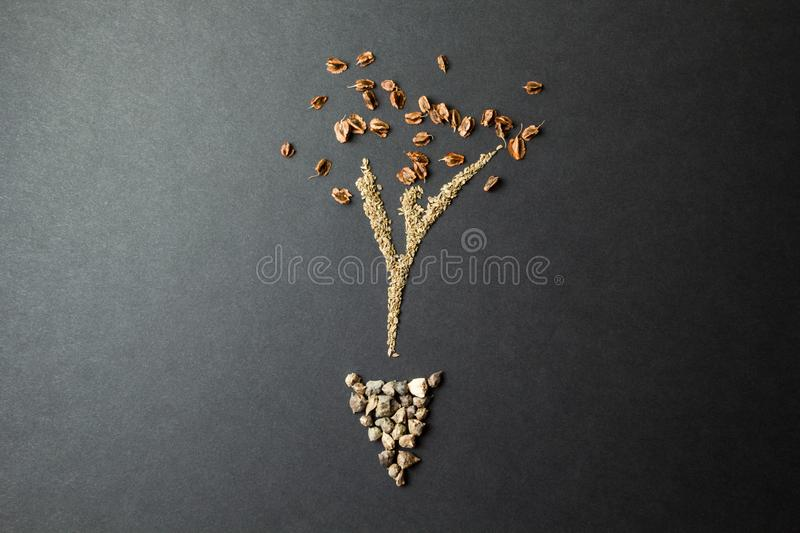 Young sprout from grass seeds on a black background royalty free stock images