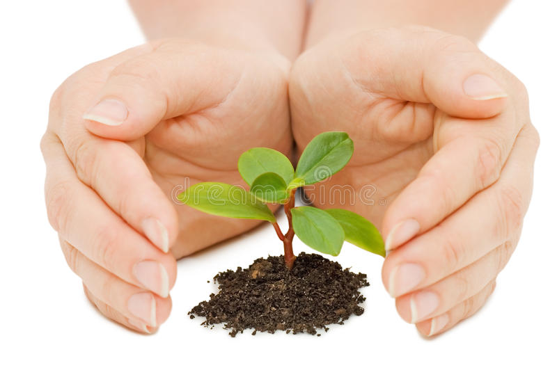 Young sprout and hands royalty free stock image