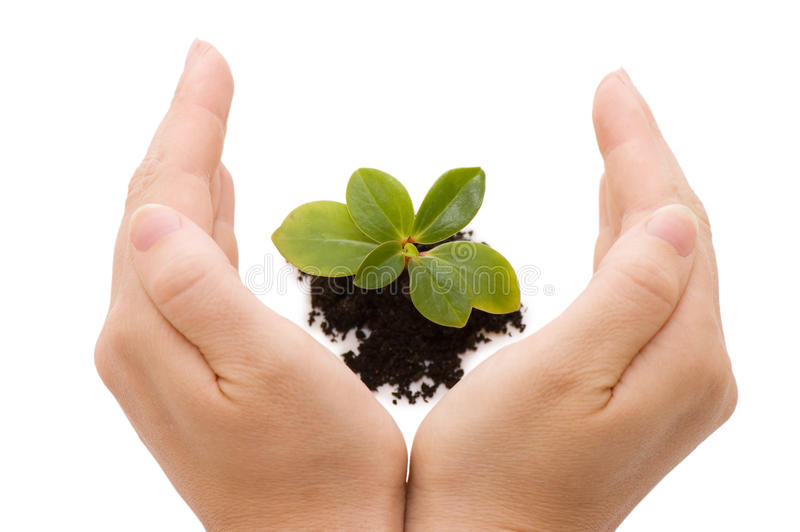 Young sprout and hands royalty free stock photos