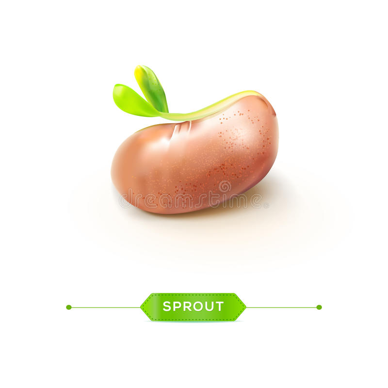 Young sprout with seed vector royalty free illustration