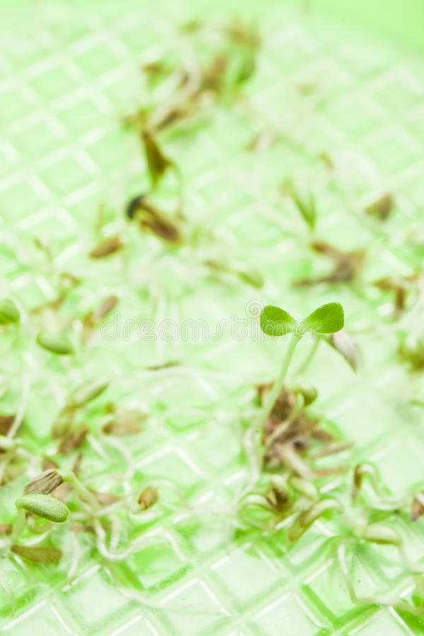 Young sprout from seeds on a green background, vertical stock photos