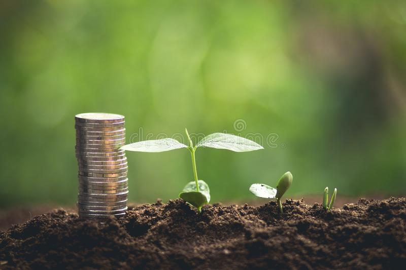 Young tree plant a tree Watering a tree in nature light and background,Growing trees and money. Young sprout in springtime,Closeup.Hands of farmer growing plant royalty free stock photo