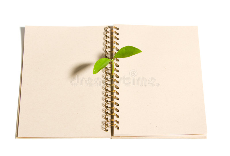 Young sprout in the studio royalty free stock photos