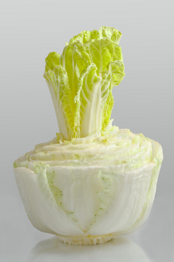 Young sprouts cabbage pe-tsai royalty free stock images
