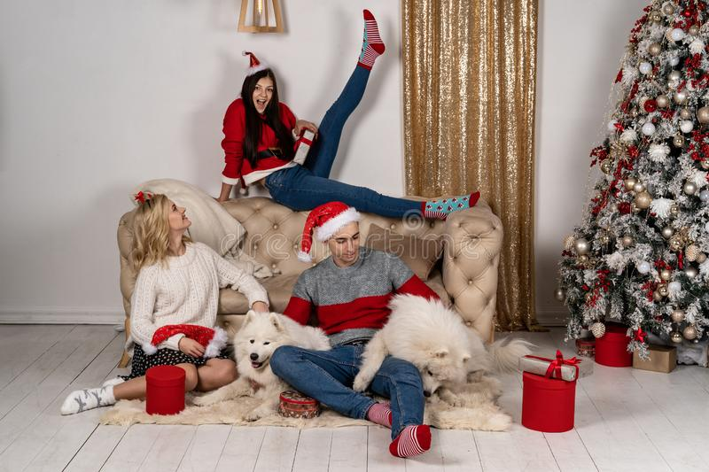 Young stylish people in sweeters posing and smiling with dogs near christmas tree royalty free stock photos