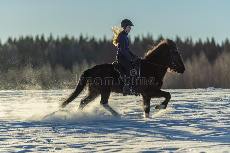 Young Swedish woman riding her Icelandic horse in deep snow and sunlight stock image