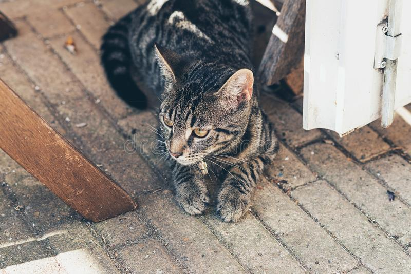 Young tabby cat lying on floor in open door. High angle view stock image