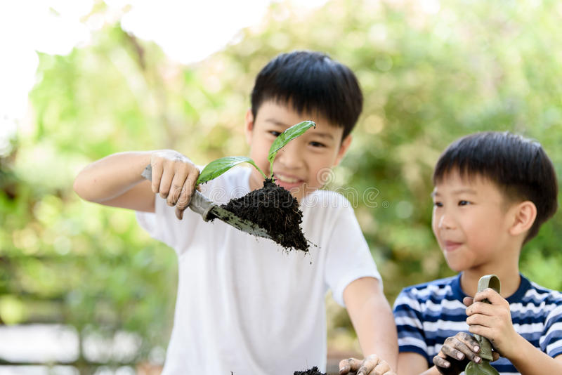 Young Thai boy planting little seedling. Selective focus at hand, Young Thai boy planting little seedling on the black soil in the garden. Earthday concept stock photo