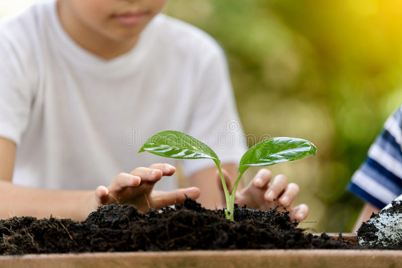 Young Thai boy planting little seedling. Selective focus at hand, Young Thai boy planting little seedling on the black soil in the garden. Earthday concept stock image