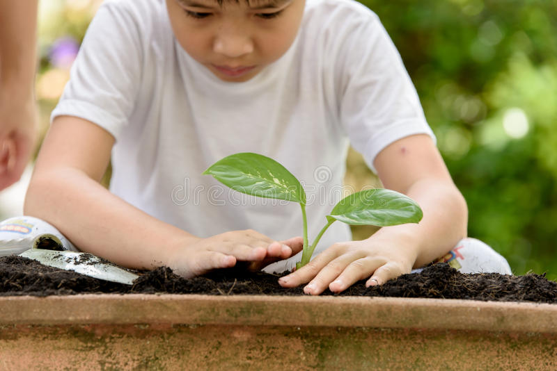 Young Thai boy planting little seedling. Selective focus at hand, Young Thai boy planting little seedling on the black soil in the garden. Earthday concept royalty free stock photography