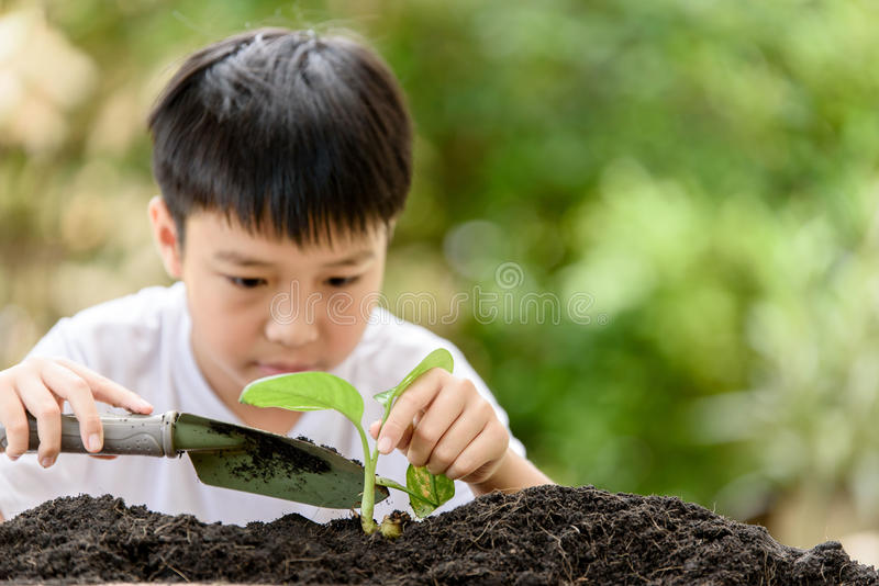 Young Thai boy planting little seedling stock photos