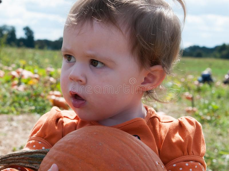 Young toddler girl outside holding a pumpkin with pumpkin fields in the background royalty free stock image