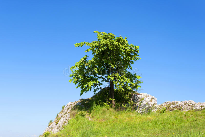 Download Young tree stock photo. Image of tree, rock, meadow, green - 26814612